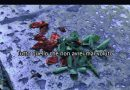 Nuovo video clip per i Renoior